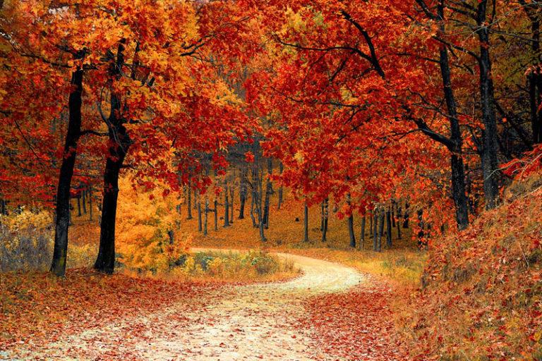 So stylt man jedes Must-Have Kleid für den Herbst
