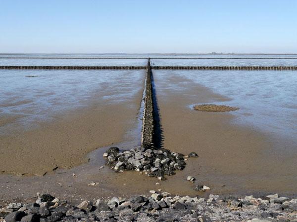 Das Wattenmeer – Weltnaturerbe in Gefahr
