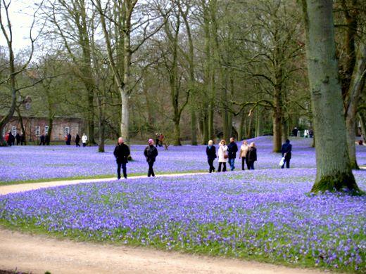 Krokusblüte in Husum – Krokusblütenfest 2009 Impressionen