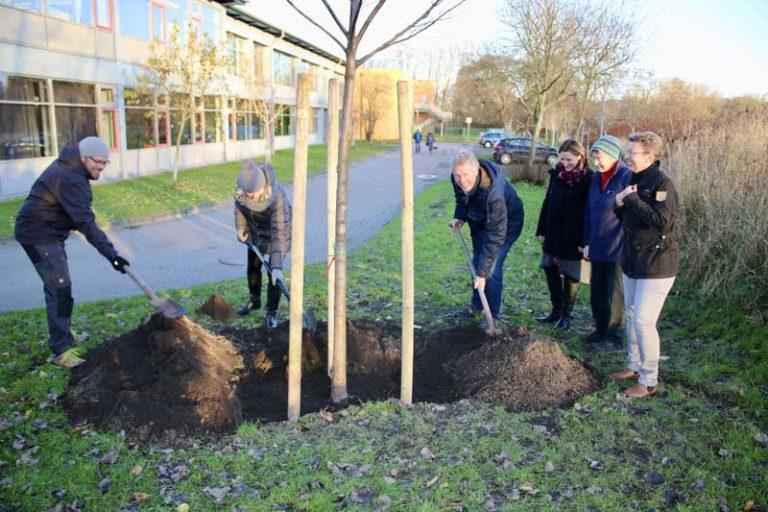 Baum des Jahres 2019: Flatter-Ulme an der Husumer TSS gepflanzt