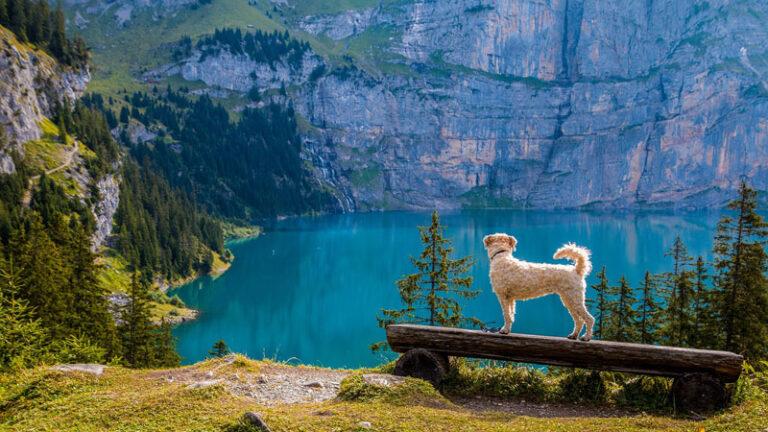 Hundeversicherung für Hunde – Braucht man einen zusätzlichen Auslandsschutz?