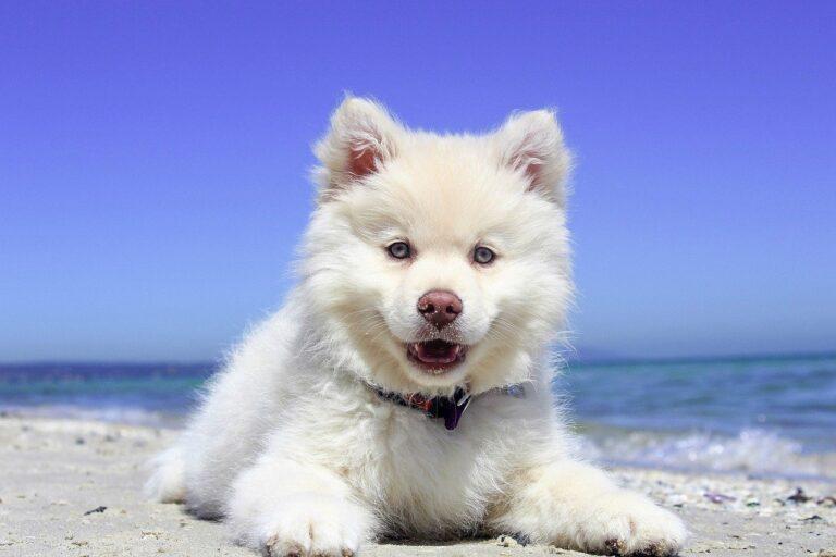 Mit dem Hund auf die Insel